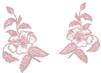 rosa--pink--flowers--blommor