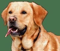 dog-chien