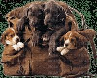 sac chiens