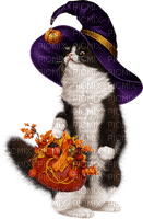 automne halloween chat sorciere cat halloween autumn witch
