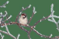 Bird.Oiseau.winter.hiver.Branche.branch.Victoriabea