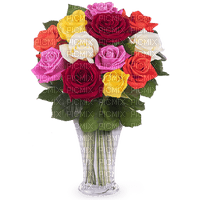 valentine valentin fleur flower red rose