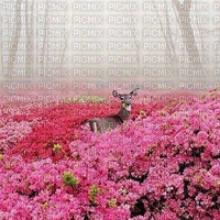 FLOWER FOREST GARDEN