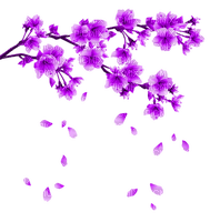 purple flowering branch spring printemps branche violet fleur