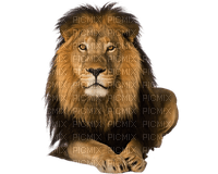 Kaz_Creations Animals Lion