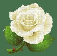 white rose blanc rose🌹🌹