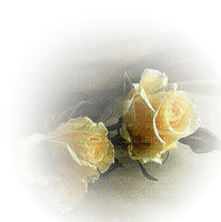 yellow roses jaune