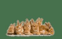 bunny easter lapin pâques