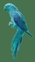 Kaz_Creations Birds Bird Parrot Blue