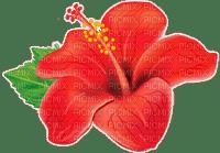 tropical flower fleur rouge🌺🌺