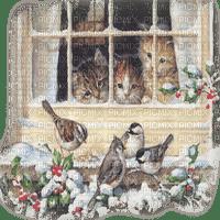 chat oiseaux hiver cats birds winter