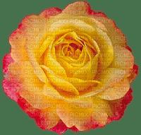 Flowers yellow rose bp