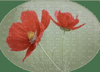 blommor-flowers--red--röd