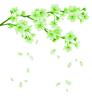 GREEN SPRING FLOWERING BRANCH printemps branche vert fleur