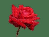 kukka fleur flower rose