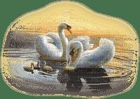 Swans 2NitsaP