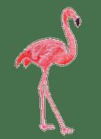 bird - flamingo Nitsa P
