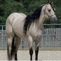 Zilver paard