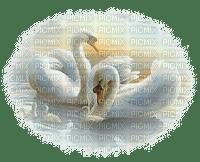 swan schwan pond teich
