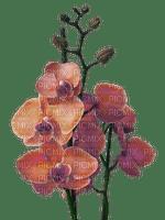 fleur-orchidée