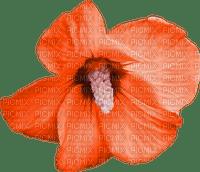 orange-arancione-fleur-fiore-flower-blomma-minou52