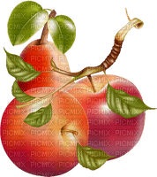 apples branche  deco pommes  branch