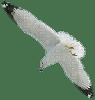 gull_mouette_bird_Oiseau-Blue DREAM 70