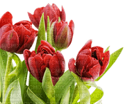 Fleurs.Tulips.Tulipes.Tulipanes.Victoriabea