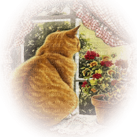 cat window chat fenetre