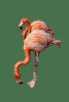 Kaz_Creations Flamingo