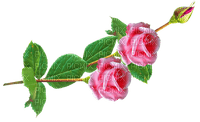 fleurs,tube,deko,love,rose,encre,glitter, coeur, GIF. animation,Saint Valentin,Irena,gommage Pelageya