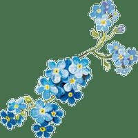 blue flower vergissmeinnicht  forget me not fleur bleu myosotis deco
