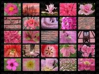 Mosaïque de fleurs récompense Careri