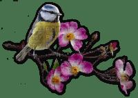 Blaumeise auf Wildrose