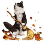 halloween chat cat broom autumn