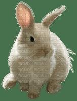 white bunny blanc lapin