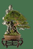 bonsai tree asia room deco