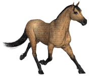 horse cheval