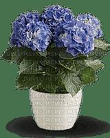 Kaz_Creations  Flowers Plant