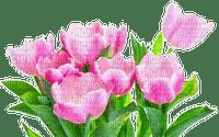 Frühling printemps spring tulipes