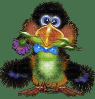 funny bird oiseau