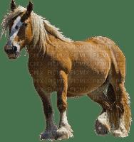 patricia87 cheval