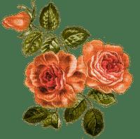 orange roses, flowers