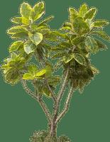 plant_plants_tube plante+plantes__Blue DREAM 70