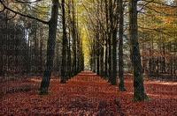 maisema landscape syksy autumn