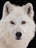 chantalmi  loup blanc