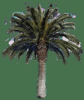 palm tree palme beach plage strand sea mer meer plant summer ete tube  tree arbre baum plante pflanze