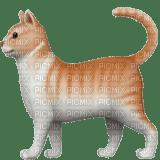 Orange cat emoji