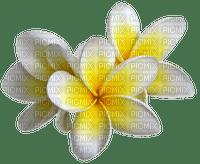chantalmi fleur jaune