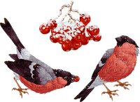 winter hiver bird oiseau  snow neige garden
